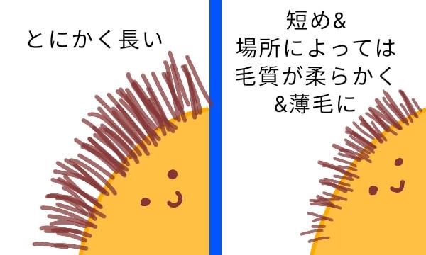 ケノンVIO脱毛時、粘膜を守りながら照射する簡単なコツ【5回目経過レポ】